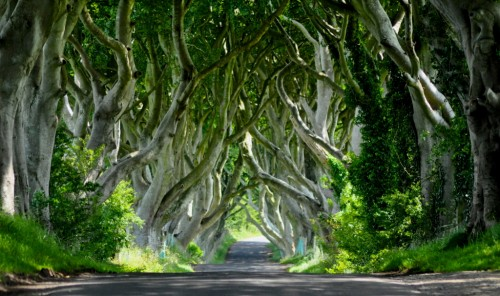 Dark Hedges, Armoy