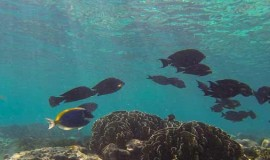 Plongée en Thailande